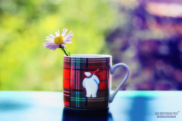 Plaid Cup III by UgurDoyduk