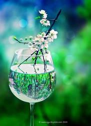 Garden of Glass by UgurDoyduk