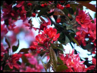 Crimson by Chocollat