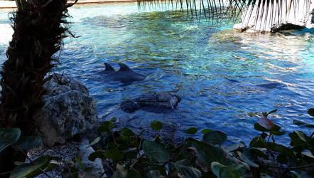 Dolphin Love by brokenone386