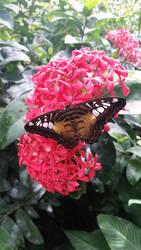 Butterfly by brokenone386