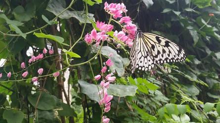 Butterfly 2 by brokenone386