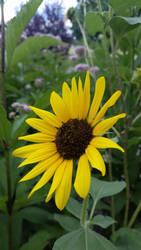 Good Morning Sunflower by brokenone386