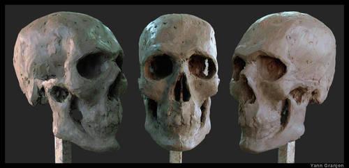 Skull Study by monoceros01
