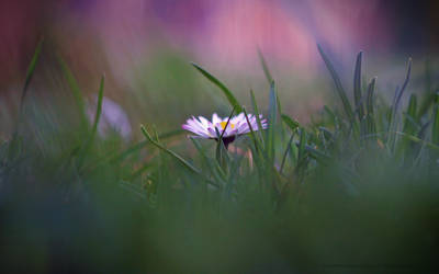 Lost in the grass by MichaelaPhotograpy