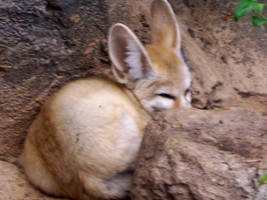 Fennec by intangiblesoul