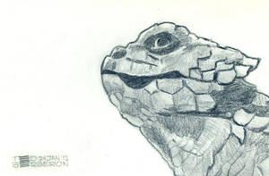 Armadillo Lizard by tedbergeron