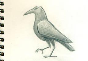 Stylized Crow by tedbergeron