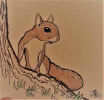 Squirrel by tedbergeron