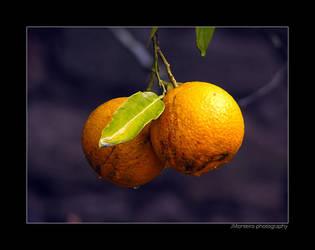 ..::Simply oranges::.. by RaStAdEvIl