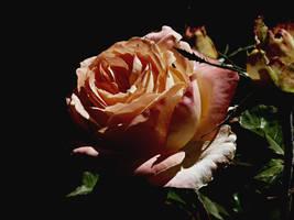 Rose of the Dark by AtomicBrownie