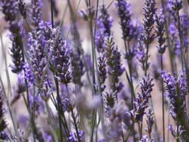 Purple Plants by AtomicBrownie