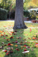 Scattered Leaves by AtomicBrownie