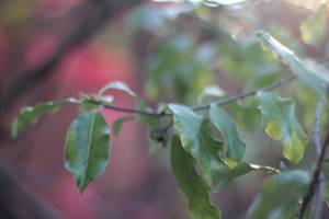 Wavering Leaves by AtomicBrownie