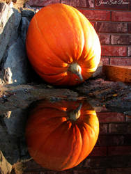 Reflecting Pumpkins by Soll-DenneGallery