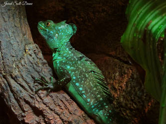 Green Crested Basilisk by Soll-DenneGallery