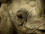 Indian Rhino Profile Shot by Soll-DenneGallery