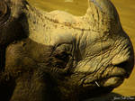Indian Rhino Profile Shot 2 by Soll-DenneGallery