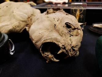 Mummified Cat by Soll-DenneGallery