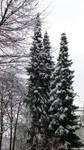 Snow - 12 by Delragon