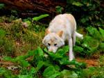 White Wolf by Delragon