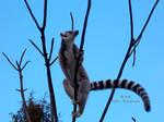Lemur - 25 by Delragon