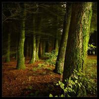 The Darkness The Lightness by rad-ix