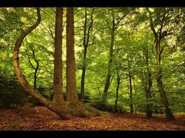 Harp Tree by rad-ix