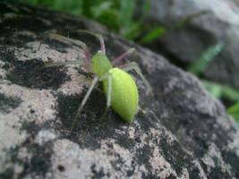 Radiactive Spider by AirborneTerror