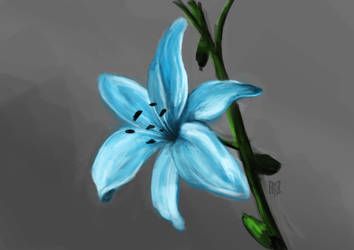 Lily by SamuelKeck