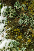 Texture of lichens, snow and wood by steppeland