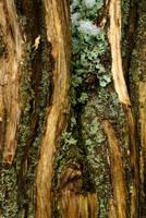 Lichens texture on debarked stem by steppeland