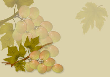 White Grapes background-design stock by steppeland