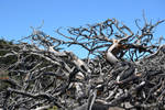 Gnarled Dead Trees Stock1 by jojo22