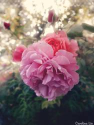 Soft Pink by CaroQueen200