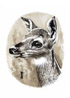 Watercolor Deer 02 by hamdiggy
