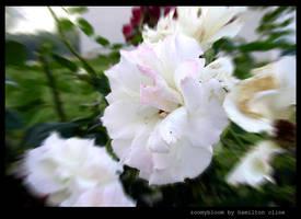 zoomybloom by hamdiggy