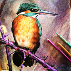 Icebird by Irishaaa