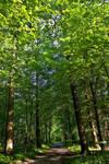deep forest by Armandacyd
