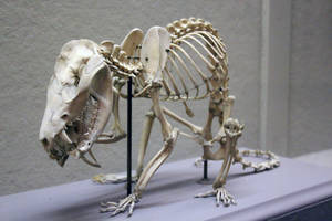 Skeleton Stock 1 by jayjd2 by jayjd2