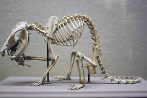 Skeleton Stock 2 by jayjd2 by jayjd2