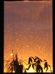 Sunset and Rain by big-veined-girl