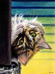 Peek-a-boo by nicolepellegrini
