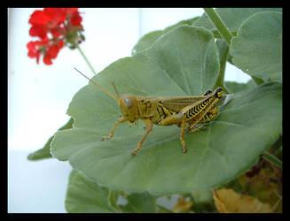 Grasshopper King 2 by composmentis