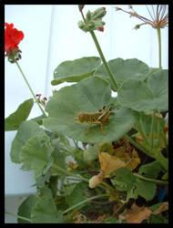 Grasshopper King 3 by composmentis