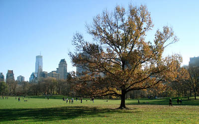 Lonely Tree in Central Park by composmentis