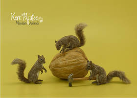Miniature 1:12 squirrel sculptures - The Jackpot by Pajutee