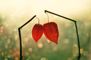 Two Hearts by Astranat
