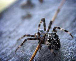 Spider-Lady by SprayCaint123