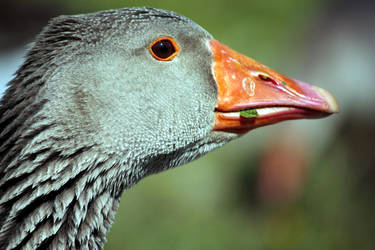 A Simple Goose by SprayCaint123